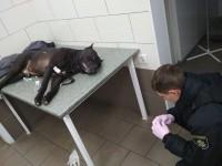 Evhen Zborowski: Сумно, коли через дурість людей страждають тварини