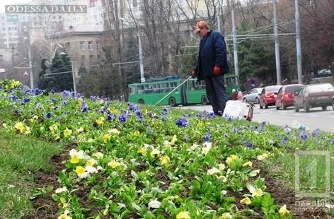 Ко Дню освобождения Одессы город украсят цветами