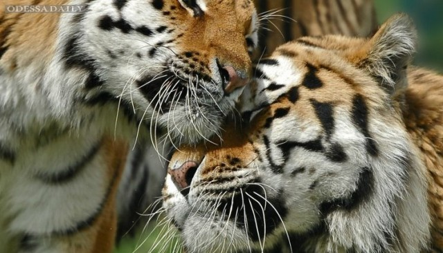 Одесский зоопарк расширять и переносить не будут
