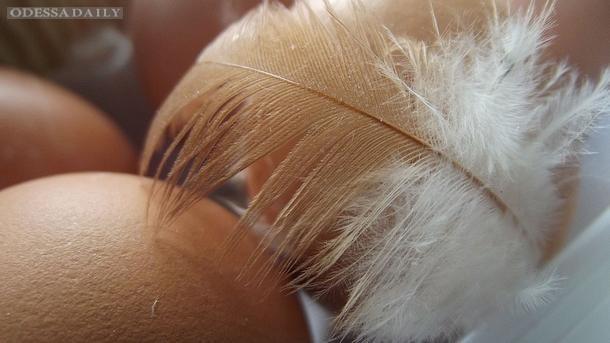 Беларусь запретила куриц и яйца из Украины