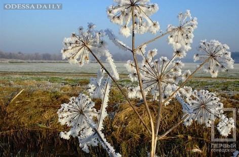 С завтрашнего дня в Одесскую область придут заморозки