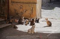 Одесситам предлагают поддержать петицию о признании котов частью экосистемы города