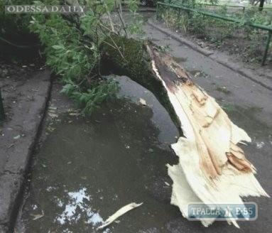 Штормовой ветер повалил деревья и крупные ветки в Одессе