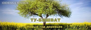 Ту би-Шват - Новый год деревьев