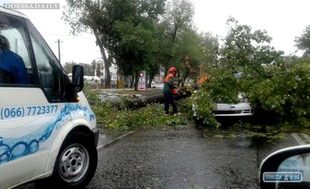 Штормовой ветер в Одессе уже повалил три десятка деревьев