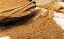 ГПЗКУ ввела запрет на торговлю с оффшорами и усилила контроль закупки зерна