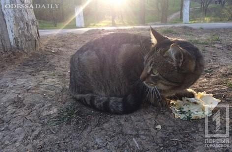 50 гривен за кота: возле канатной дороги происходят массовые убийства животных