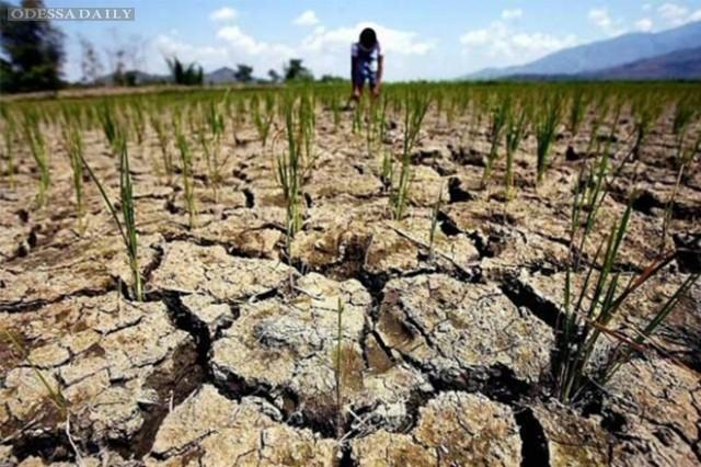 Крокодил не ловится, не растет кокос. Крым может остаться без урожая