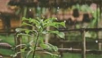 В Одесской области снова ожидают грозы и дожди