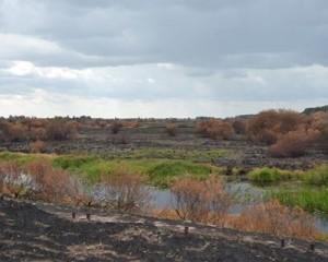 Пожар в Чернобыльской зоне окончательно потушили