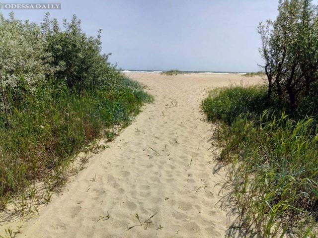 Иван Русев: Затока - дерибан уникального побережья продолжается