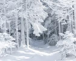 Коммунальщики вышли на уборку снега