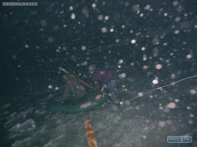 Одесситы спасли замерзающего лебедя, попавшего в ледяной плен в море
