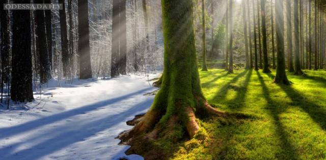 Сегодня - Всемирный день окружающей среды