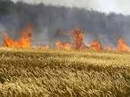 Пожары в Одесской области: горит сухая трава