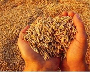 Украина начала закупать зерно в Беларуси