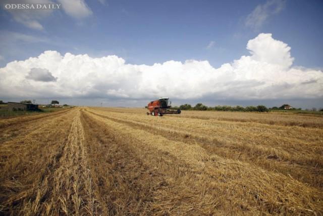 В мире третий месяц дорожает еда, - ООН
