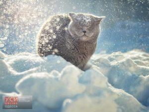 В Одесской области резко похолодает: синоптики обещают снегопады и метель