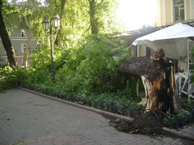 Спаси город! Одесситы призывают самостоятельно посадить деревья в городе!