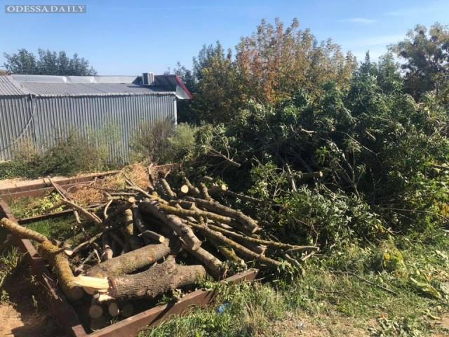 Сергей Кривенко: Незаконное спиливание деревьев в Лиманском районе Одессы
