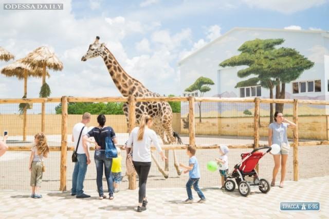 Одесский Биопарк оштрафован на 2,6 млн грн за самовольное строительство