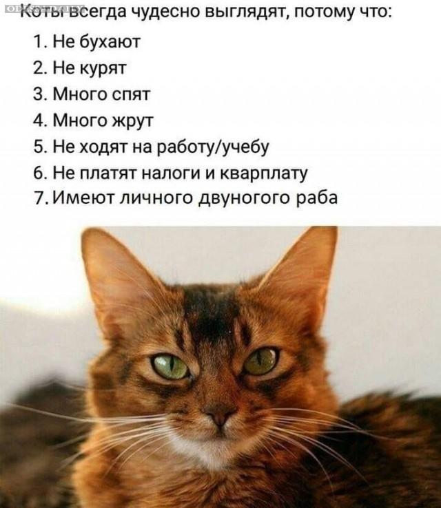 Коротко о котах