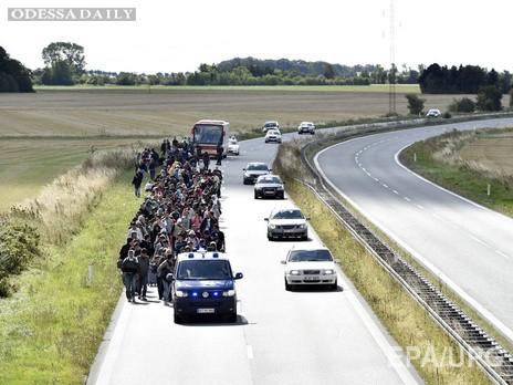 Дания депортировала прибывших из Германии сирийских мигрантов