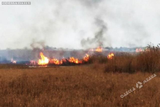 В Одесской области браконьеры подожгли камыш, чтобы выкурить и убить животных