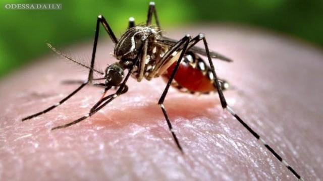 С вирусом Зика попробуют бороться с помощью Google - комаров
