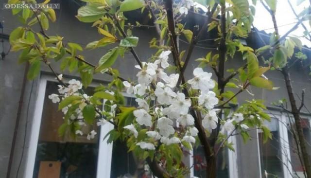 Морозы уничтожили урожай ранних фруктов в Одесской области, – эксперт