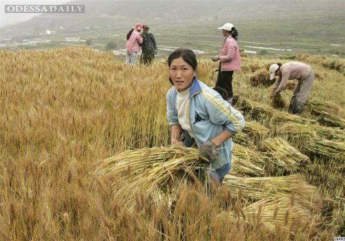 Присяжнюк уверяет, что Украина не будет сдавать Китаю землю в аренду