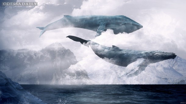 Охота на Синих китов: полиция провела обыски у администраторов групп смерти