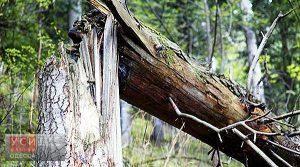 В Одессе счет упавших деревьев и веток превысил сотню