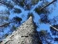 Что ждет биомассу в будущем?