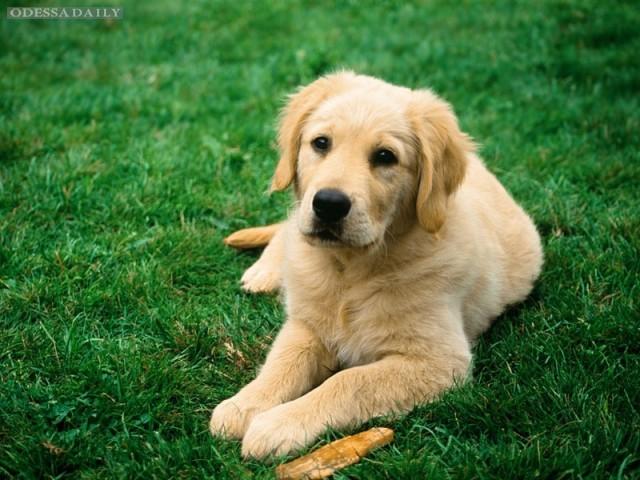 Ученые обнаружили у собак способности к сопереживанию