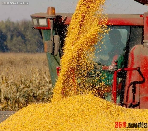 В порту «Южный» нашли три тысячи тонн контрабандной пшеницы