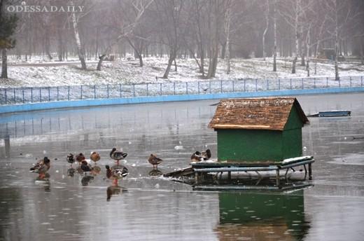 Одесситов просят не выходить на лед прудов в парке Победы