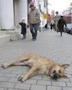 Украину захлестнула волна убийств животных, в первую очередь — в Киеве