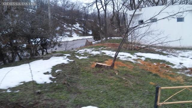 Расследование незаконной вырубки деревьев на склонах Ланжерона. Часть 2. Программа Противоядие