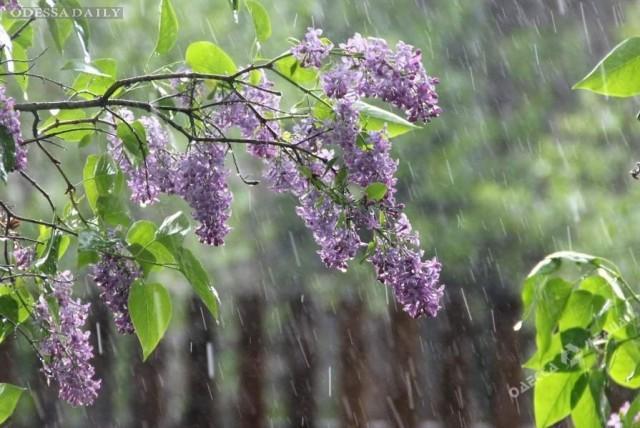 Погода в Одессе: будние солнечные, выходные дождливые