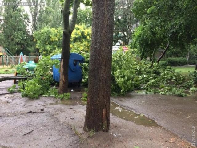 Непогода повалила 12 деревьев в Одессе