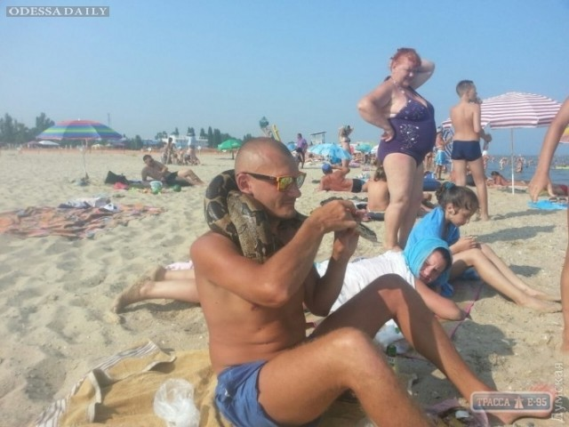 На пляже под Одессой нашли питона