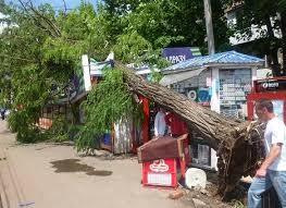 До конца лета упавшие деревья могут пролежать на улицах Одессы