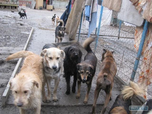 Численность бездомных собак в городе сократилась более чем на треть