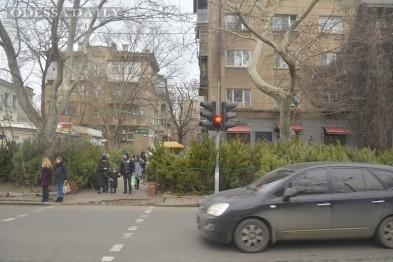 В Одессу завезли на продажу белорусские ели?