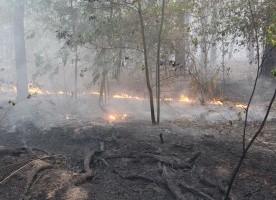Ситуация на самом мощном пожаре под Киевом: что горит