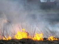 Пожар в Чернобыльской пуще локализован - ГСЧС
