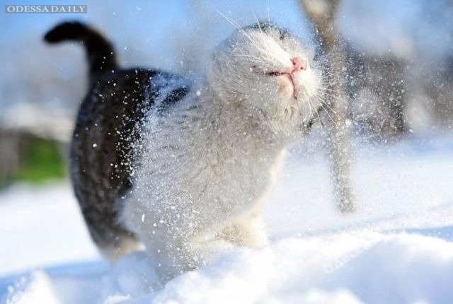 На этой неделе в Одессу придут снег и морозы