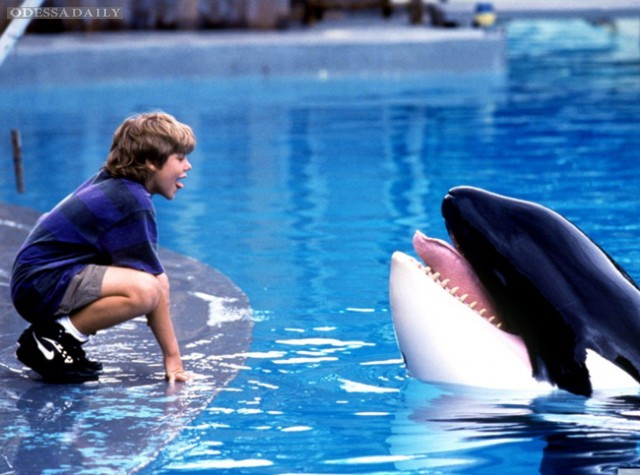 Фильмы про животных: лучшие семейные картины