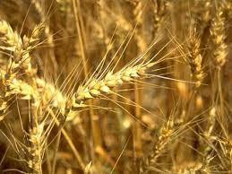 «Укрзализныця» готова перевозить миллионы тонн зерна для Китая